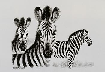 Sikker Hansen, Drie zebra's, 1955, Oost-Indische inkt en waskrijt op papier, Groninger Museum