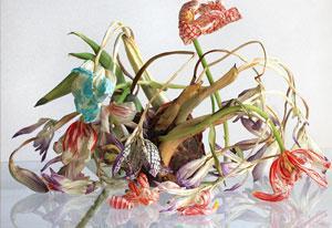 Beeld: Elspeth Diederix, 'Colchicum grid still life' (2011)