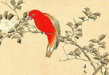 Keibun Matsumoto, 'Chattering Lory and Camellia Sasanqua' (1892). Print van een houtsnede. Beeld: Japanmuseum Sieboldhuis