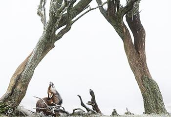Foto: Nils Poldervaart, winnaar 'De Groene Camera'
